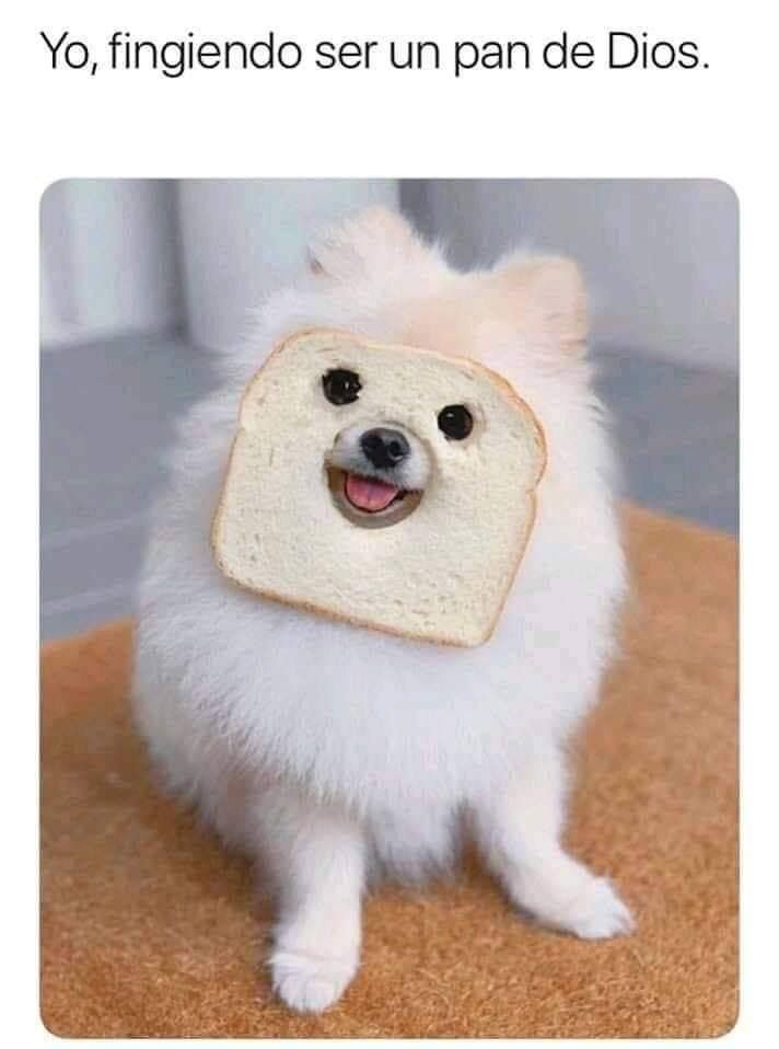 Pin De Ruth Velasco En Mascotas Memes Perros Memes De Animales Perros Frases