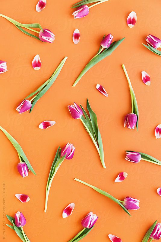 Tulip background by Ruth Black for Stocksy United
