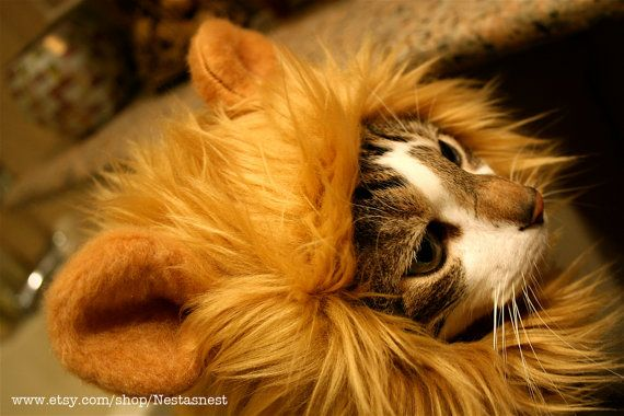 But my big guy does not need a Lion Hat for Cats by Nestasnest on Etsy, $50.00. It would be a smashing look for my favorite chihuahua, though. 5/26/14