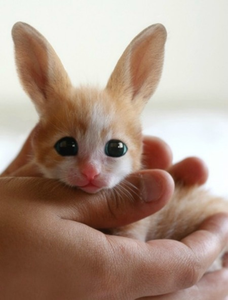 Fennec hare hoax - photo#31