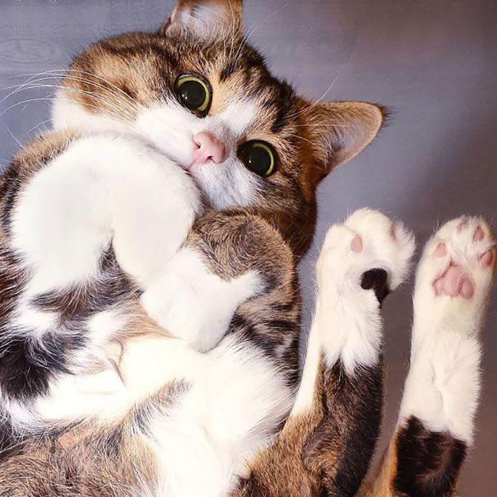 Картинки милота кошки