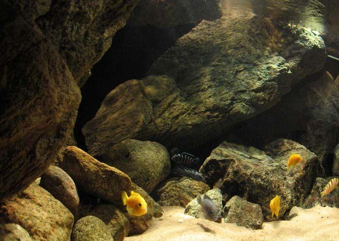 The Oasis- Malawi Biotope