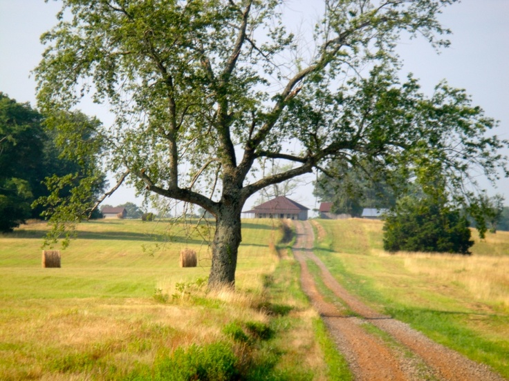 Let's stroll to the end of the road !.....dirt road, AR.