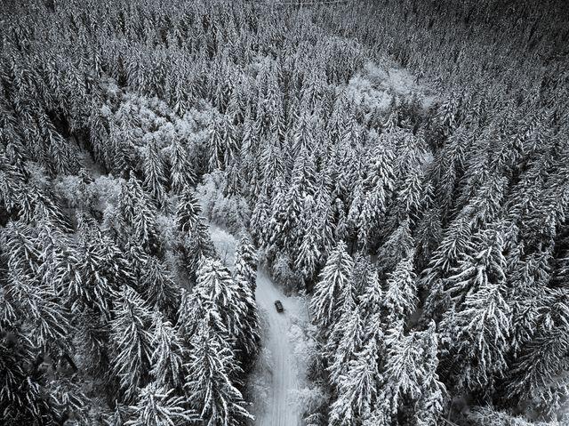 真っ白な世界で迷う(米国ワシントン州)