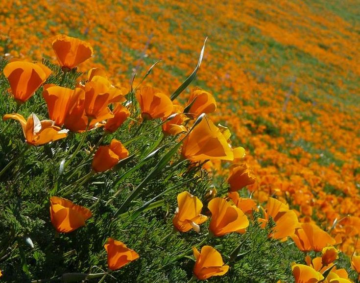 Plante plein soleil- 12 des espèces à fleurs les plus jolies et les moins exigeantes