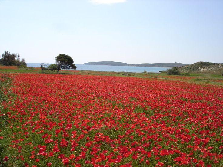 Πολιόχνη-Poliochni-Lemnos island -Greece