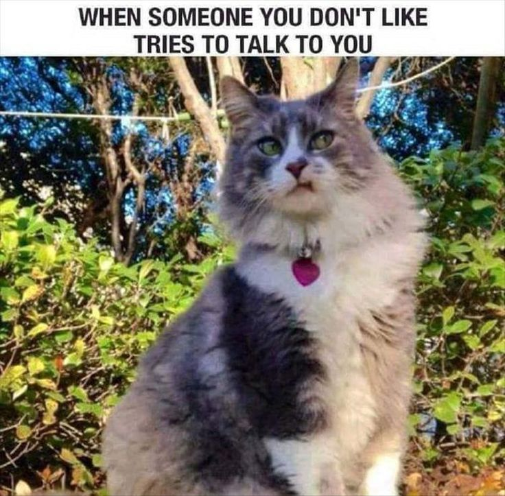 Best Funny Animal Faces Ideas On Pinterest Funny Animal - 20 hilarious cat photos captioned comedians