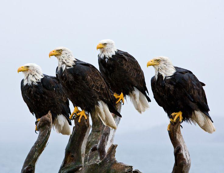 TOP: las migraciones de animales más espectaculares (FOTOS)