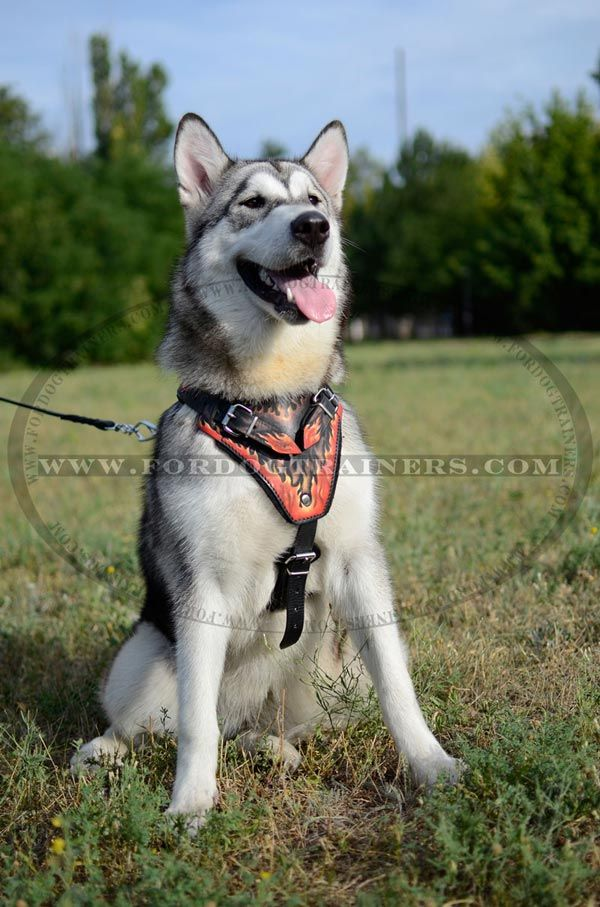 Alaskan Made Dog Collars