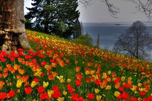 Die Blumeninsel Mainau im Bodensee ¦ pilago #Germany #Spring