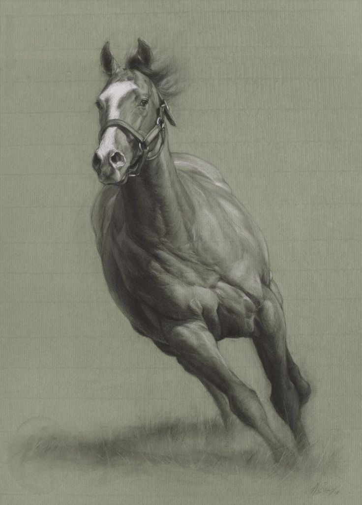 A Stallion Study