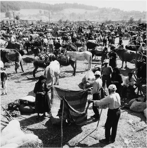 Ζωοπανήγυρη στα Τρίκαλα το 1961... Φωτογράφος Δημήτρης Χαρισιάδης. Αρχείο Μουσείου Μπενάκη.