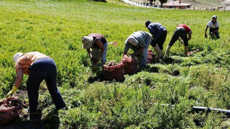 Agroindustriales expresan su preocupación