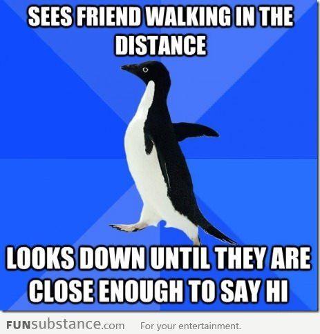 Socially awkward penguin strikes again