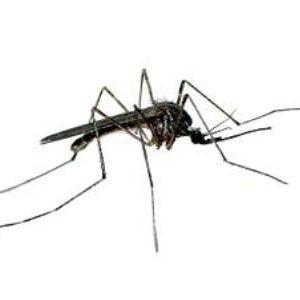 Limpopo reports rash of malaria cases