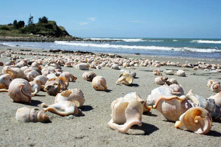 Mahanga Beach, Mahia Peninsula, NZ
