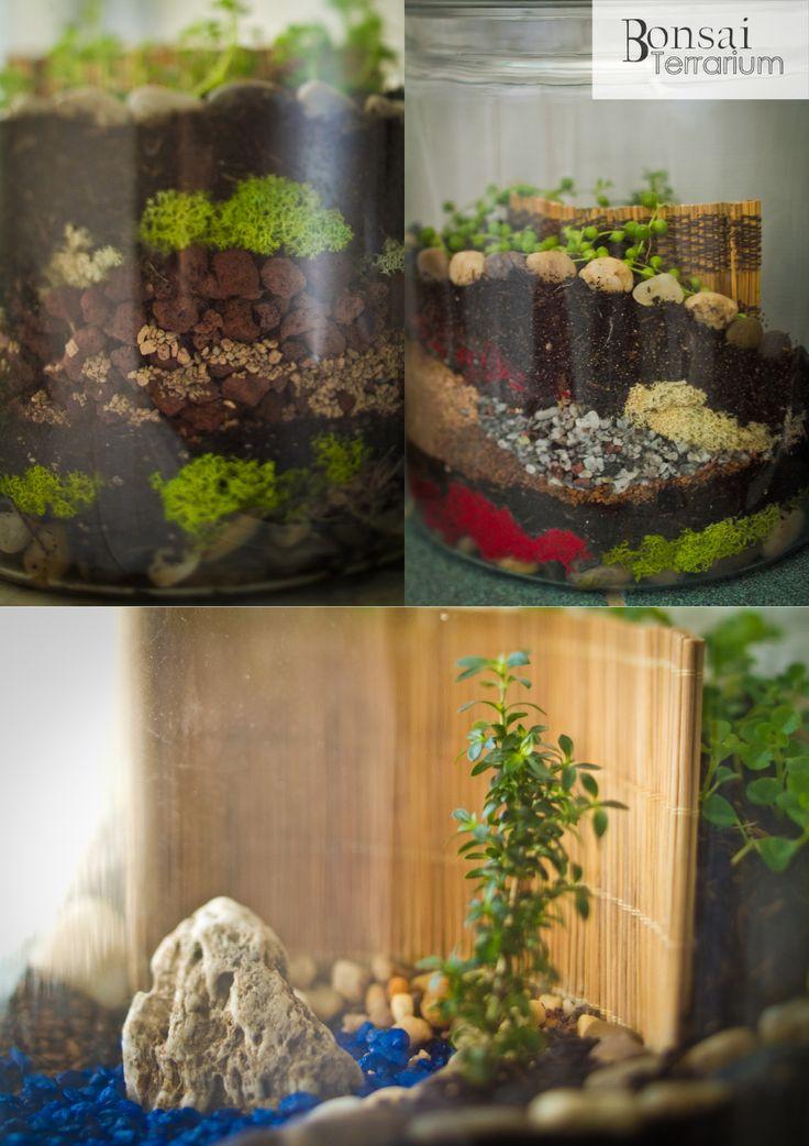 42 Best Terrain Terrariums Images On Pinterest | Glass Terrarium, Terrarium  Ideas And Terrariums