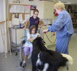 Distance Learning Certificate Course | Therapy animals