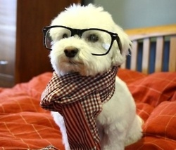 Do the glasses make me look intelligent?: Doggie, Cutest Dogs, Hipster Dogs, Dogs Memes, So Cute, Hipster Puppies, Mean Girls, Animal, Hipsterdog