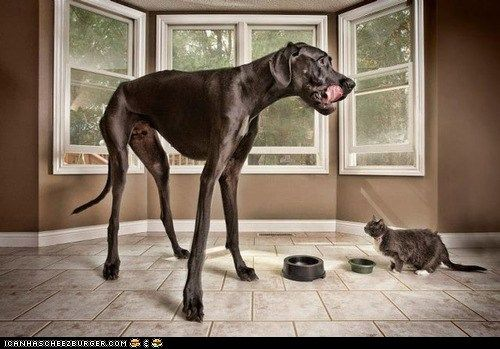 really big dog