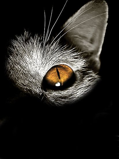 wow: Animals, Cat Eyes, Golden Eye, Amber Eye, Kitty, Black Cat
