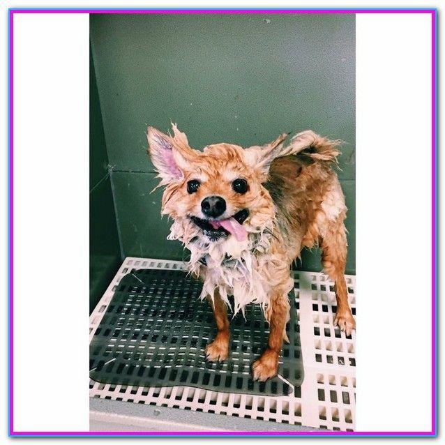 Wags Dog Grooming Raleigh Nc Dog Grooming Dog Training