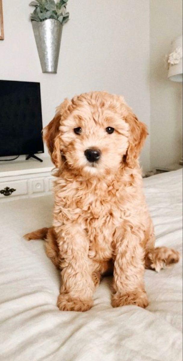 Pinterest Emmasilbb In 2020 Cute Animals Baby Animals Cute Baby Animals