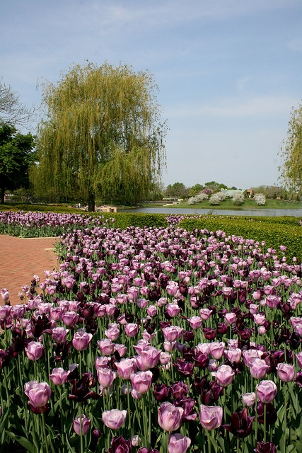 130 Best Images About Chicago Botanical Gardens Flowery 400 x 300