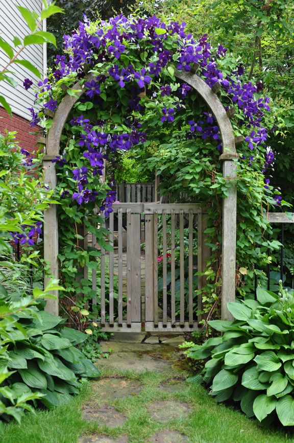 "Clematis over garden gate because ""The entrance to your garden is often one of the first things visitors will see.""  Hometalk :: Ideas for that Narrow Space in Between Suburban Homes"