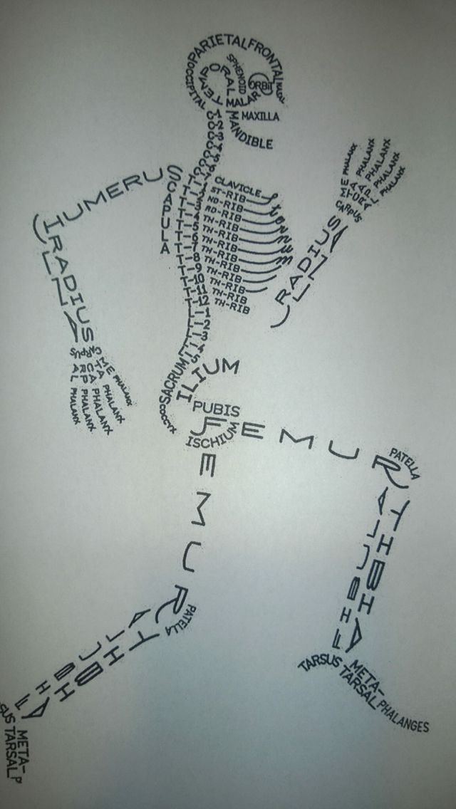A Facebook find! A visual of the skeletal system. Please see my facebook page for proper credit to the poster of this photo. https://www.facebook.com/pediatricPT/posts/1112488678784389