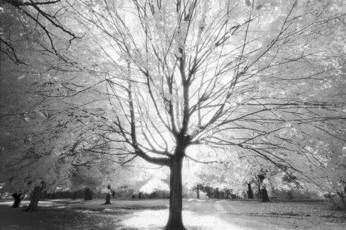 Prospect Park Infrared Tree - Brooklyn Park in Fall Wall Decal