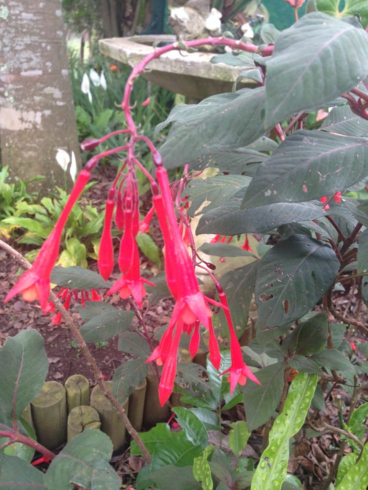 ...... and fuschia for you
