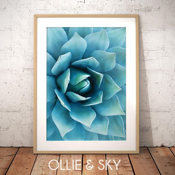 Succulent Wall Art Cacti Poster Plant Photography Close Up