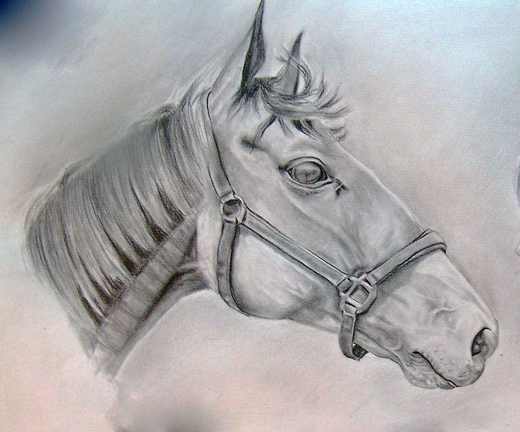 profil koně