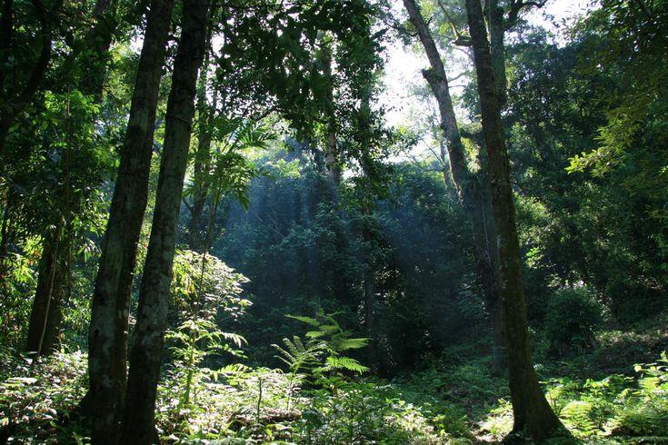 Taman Nasional Gunung Palung Keanekaragaman Hayati Terlengkap di Kalimantan Barat - Kalimantan Barat