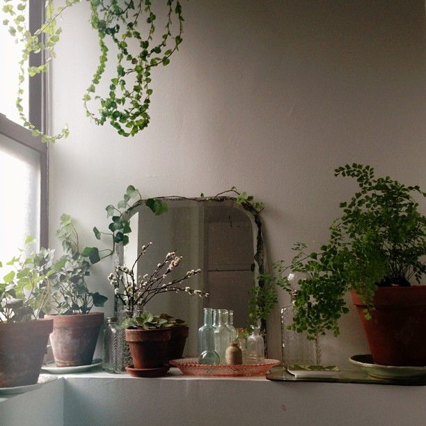 .@tip__toes | Missing my New York plant babies today