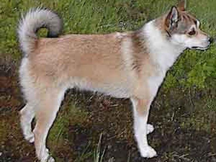 10 Razas de Perro Raras mas 10 gatos raros nuevo - Taringa!