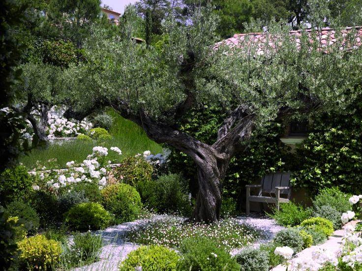 99 best Mediterranean Gardens images on Pinterest Dry garden