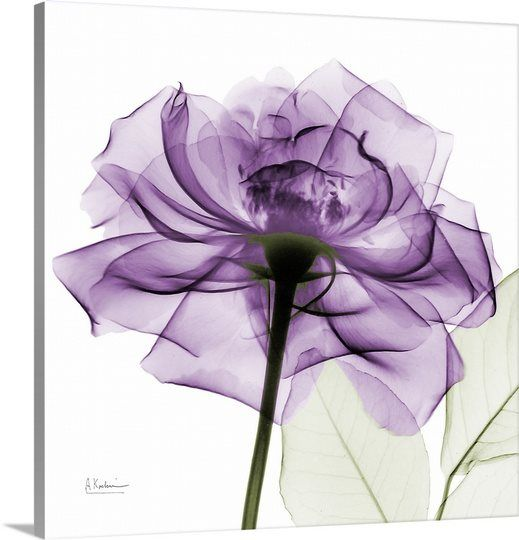 Purple Rose X Ray Photograph