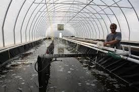 Imagini pentru aquaculture tanks