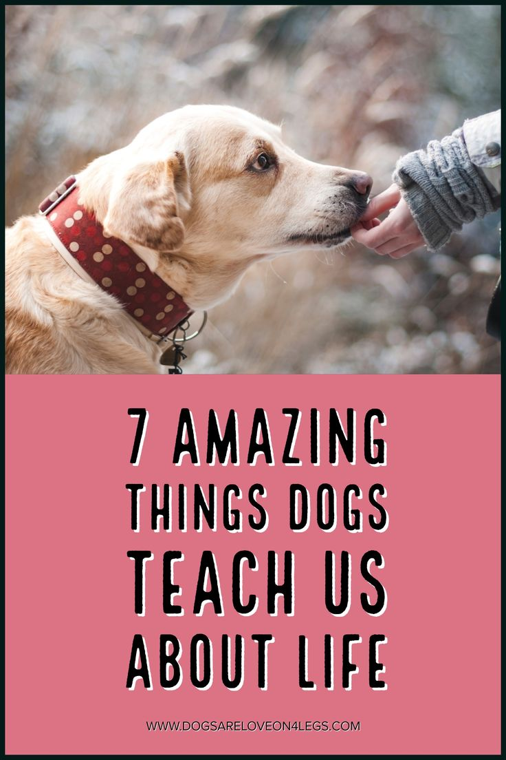 7 Amazing Things Dogs Teach Us About Life, Dog,
