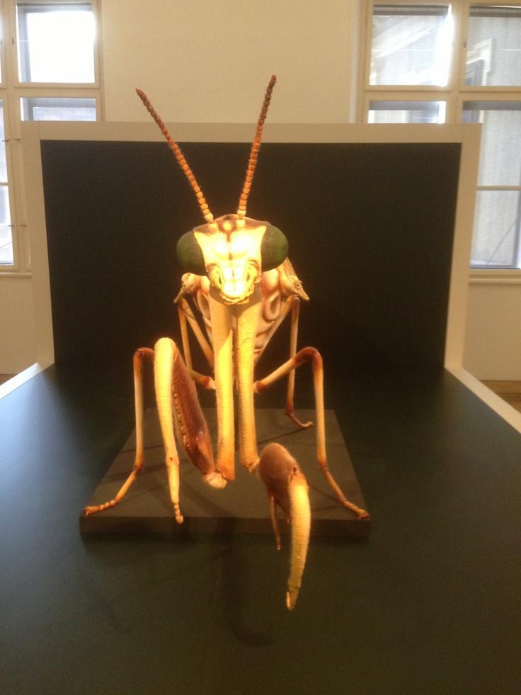 Freaky! #Naturkundemuseum #Graz