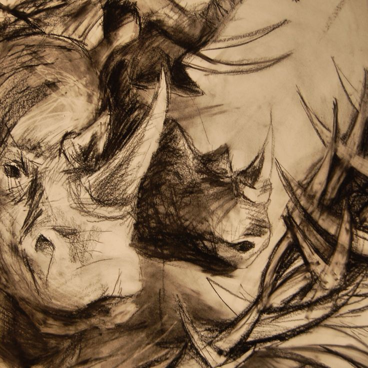 Rhinos and elepant