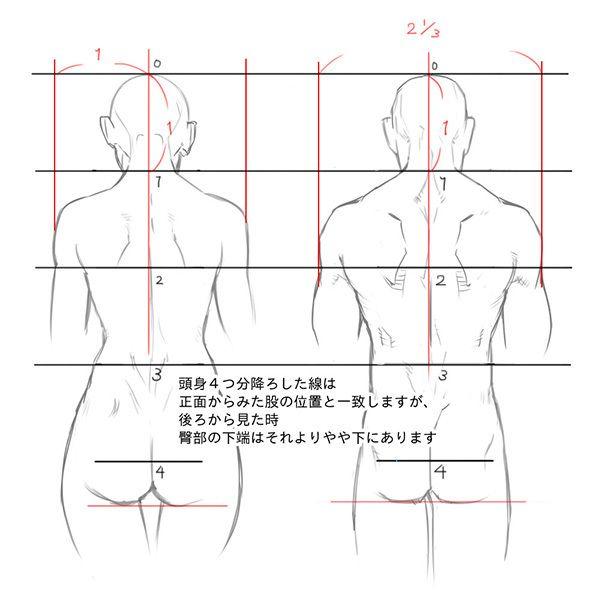 リアルな頭身を元に、理想的な人体の肩幅の比率は、 女性:頭2つ分 男性:頭およそ2 1/3つ分 男性の方がやや肩幅が広いです。