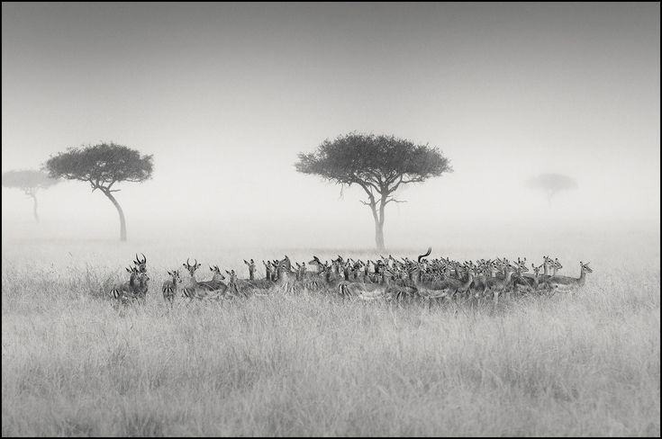 Nicolas Lotsos travels to places like Africa to liberate his soul, in a triple axis project that consists of wildlife cultural and humanitarian photography.