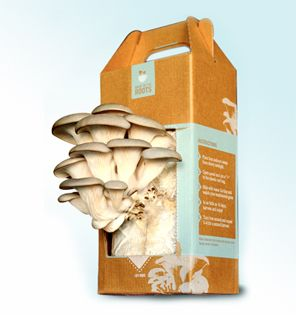 Easy-to-Grow Mushroom Garden.Gourmet Food, Holiday Gift, Mushrooms Gardens, Boxes, Oysters Mushrooms, Mushrooms Kits, Mushrooms Growing, Growing Kits, The Roots