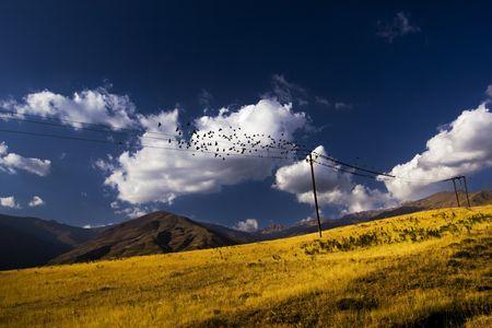 Birds Online! Photo by koorosh hallage hashemi -- National Geographic Your Shot