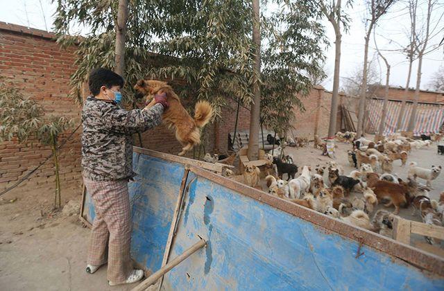 1300 kutyáról gondoskodik 5 idős asszony  http://www.nlcafe.hu/szabadido/20150303/kobor-kutya-gondoskodas-menhely-idos-nok/