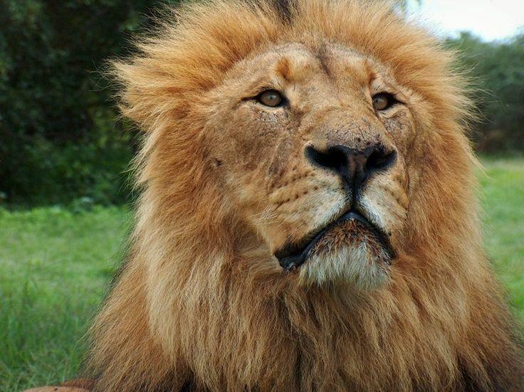 https://www.viewbug.com/photo/67469445?it#behindthelens #photography #wildlife