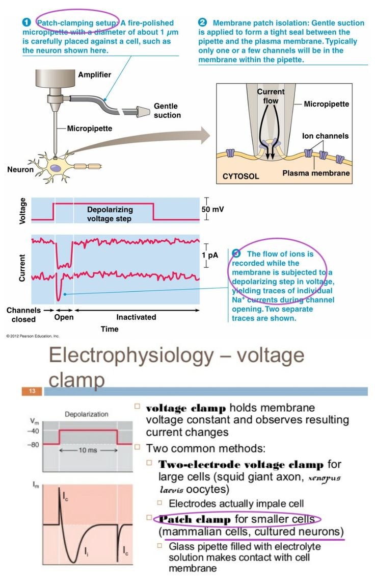 Thepatch clamp/ Voltage clamp technique is a laboratory technique in electrophysiology that allows the study of single or multiple ion channels in cells